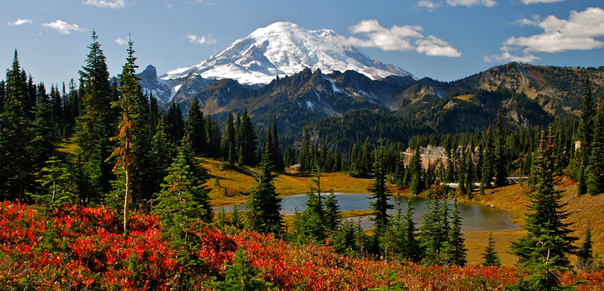 Autumn colors cover the landscape in the foreground with pine trees and Mt. Rainier in the background in Mt. Rainier National Park in Ashford, Washington on clear day while hiking the Naches Peak Loop Trail