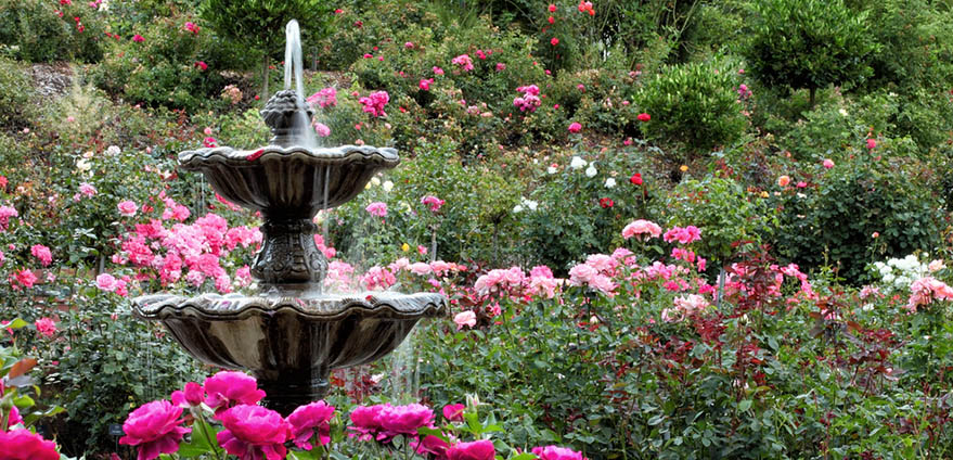A fountain amid various shades of pink roses in the International Rose Test Garden in Portland, Oregon
