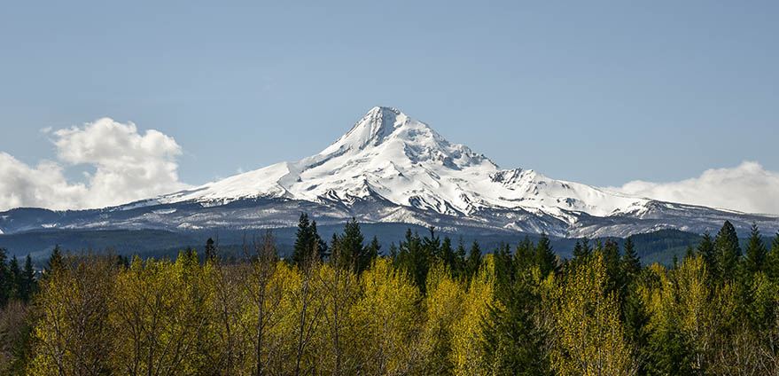 View of snow-capped mountains at Mount Hood, Oregon's highest mountain on a clear day, taken from the Paradise Park Loop In Mt. Hood, Oregon