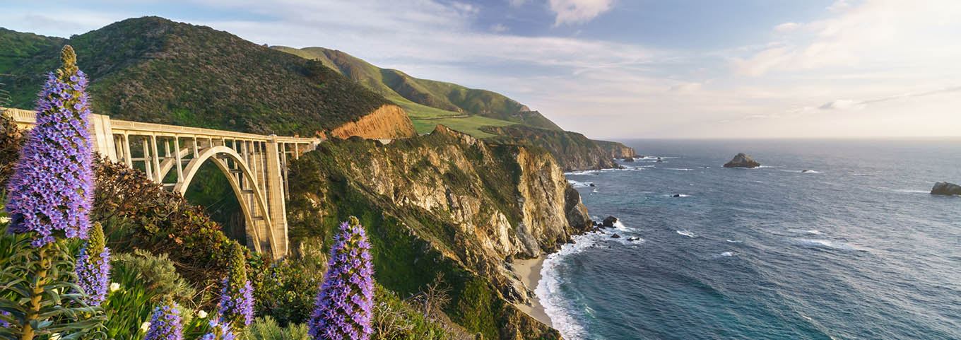 Purple flowers bloom along the Big Sur coast of California near Bixby Bridge