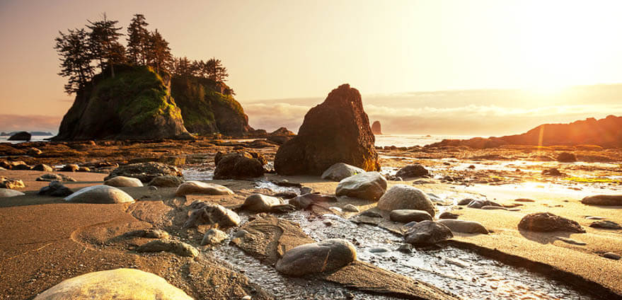View of a shore full of rocks, and tide pools on sand with tall rock formations with trees in the background all washed in the golden light of sunset in Olympic National Park in Montana