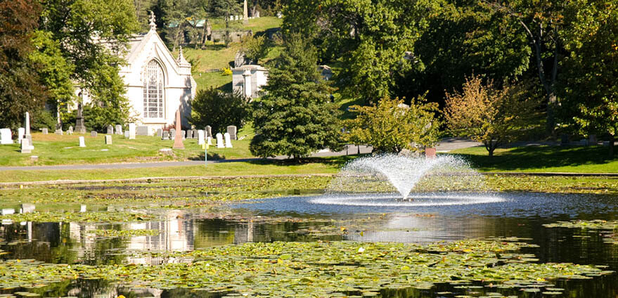 The pond and lily pads are hit by the bright afternoon sun at Greenwood Cemetery.