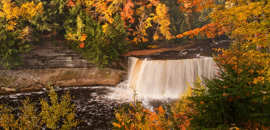 Upper Tahquamenon Falls, Tahquamenon Falls Sate Park, Michigan's Upper Peninsula in autumn shows gold, yellow orange and green leaves surrounding a waterfall