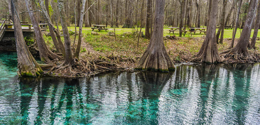 A blue water spring surrounded by lush green trees in Wekiwa Springs State Park, Florida.