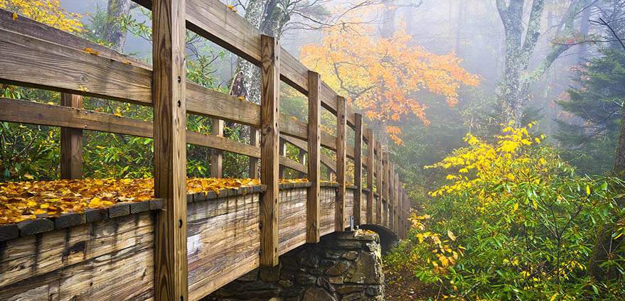 Autumn Appalachian Hiking Trail Foggy Nature Blue Ridge Fall Foliage Bridge near Grandfather Mountain